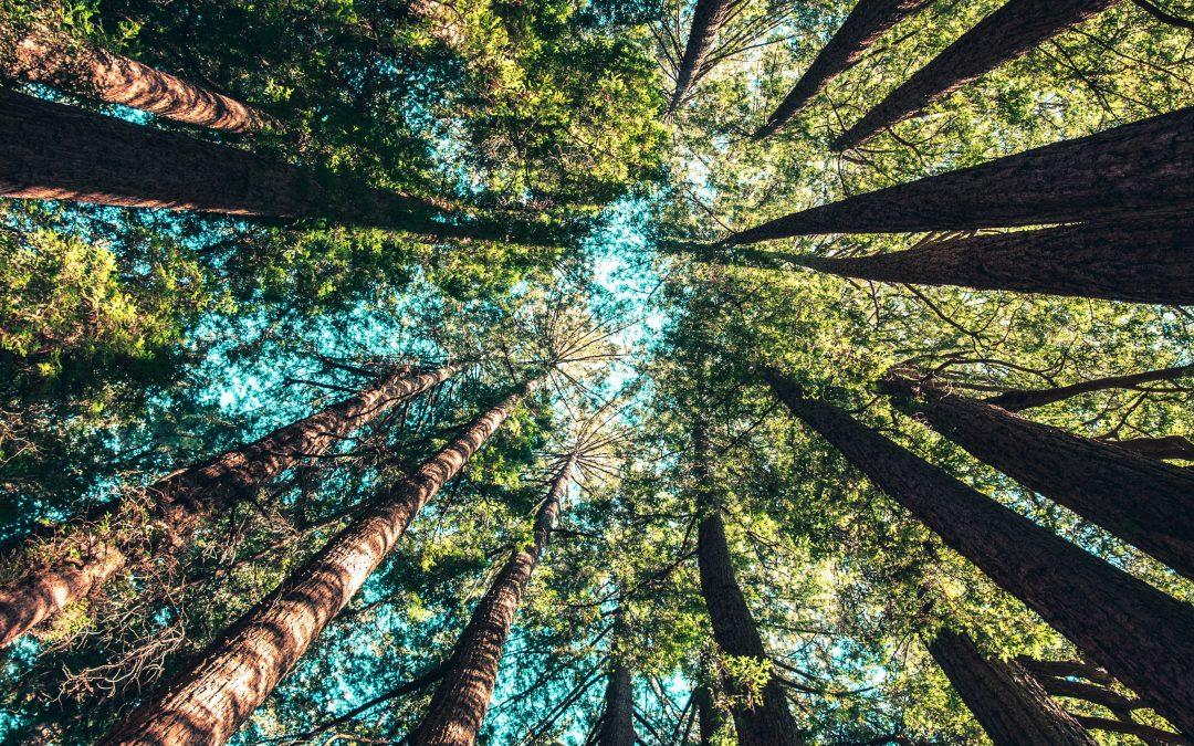 bomenkap teller