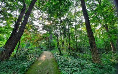Red de bomen in 't Park Niel
